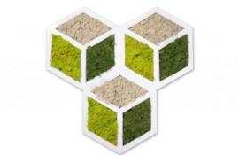 Moduli parete verde