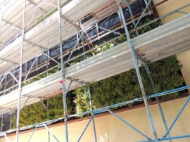 Manutenzione giardini verticali