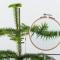 controllo qualità piante