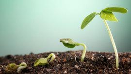 crescita piante